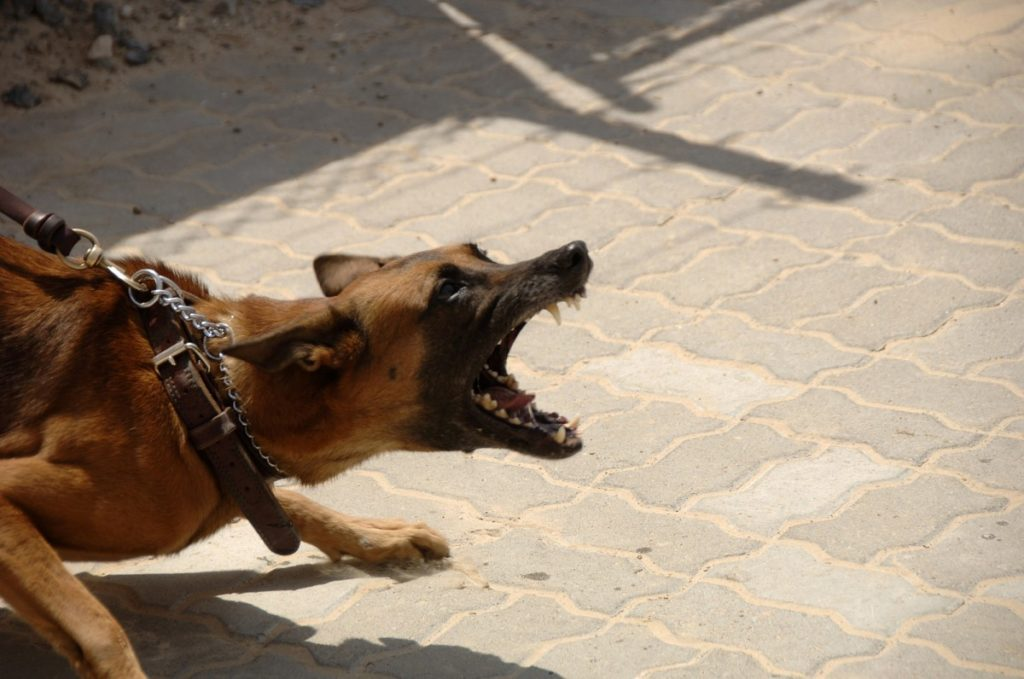 What Can You Do About Your Neighbor's Aggressive Dog- An aggressive dog