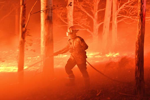 Australia's Fires May Have Wiped Out Entire Species Already! |