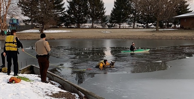 German Shepherd Fell into Icy Water