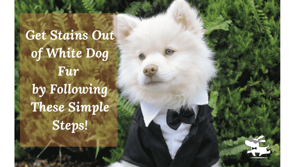 Get Stains Out of White Dog Fur  by Following These Simple Steps!