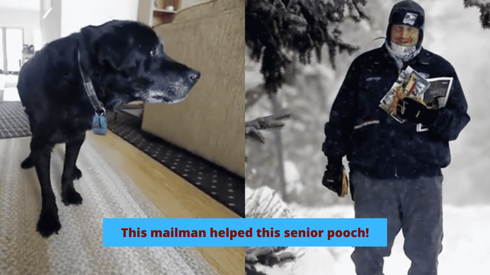 A Mailman Sees This Poor Senior Dog Struggling Every Day, So He Helped Him! |