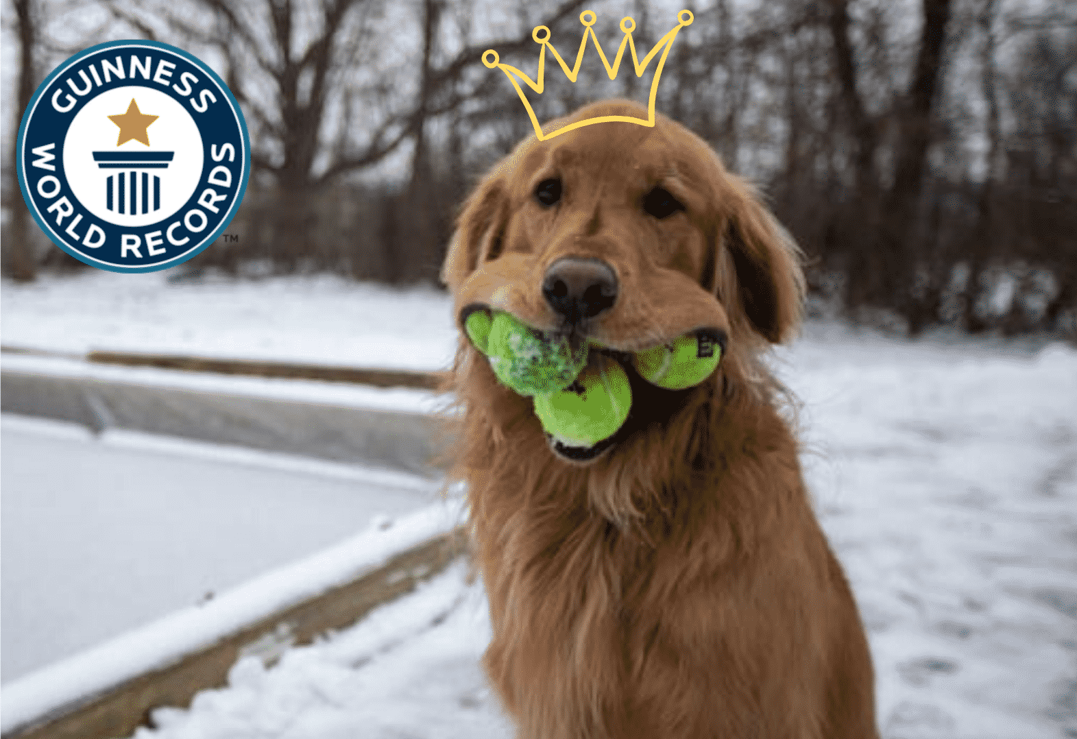 A Six Years Old Golden Retriever Broke a Guinness World Record! |