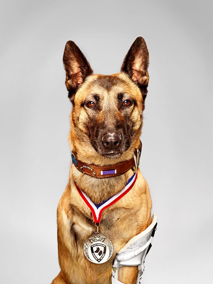 5 Heroic Dogs Prove that A Dog Is A Man's Best Friend! |