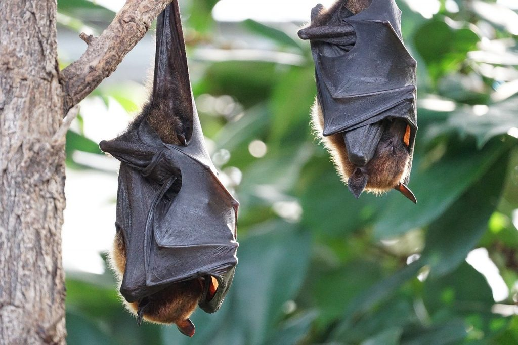 Indonesia Burns Hundreds of Bats in Pits Raging With Fire Because of Coronavirus |