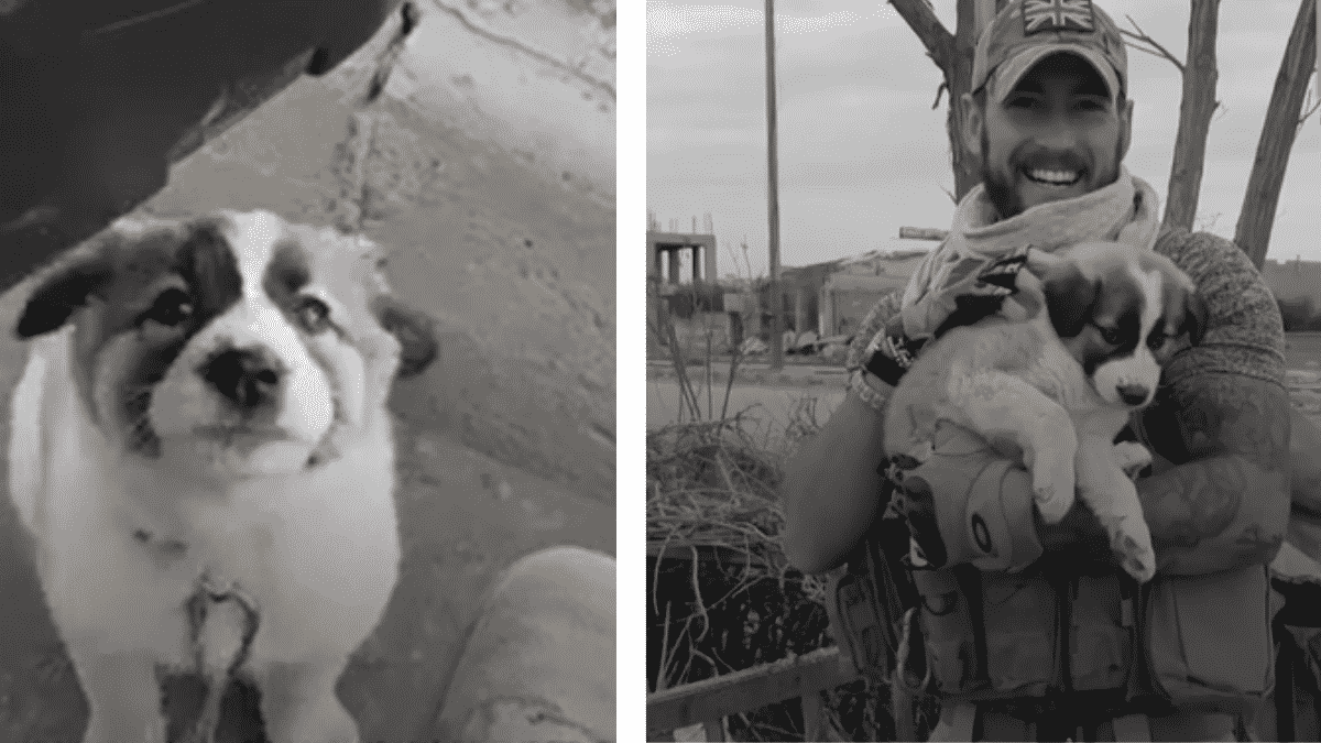 Soldier Rescues A Puppy in the Middle of War Ruins Changing Both His Life As Well As Her's |