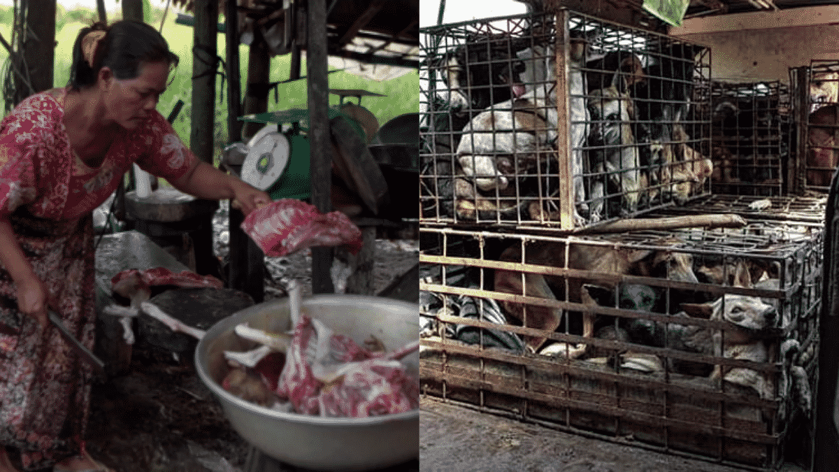 """Horrible Dog Meat Trade in Cambodia Allows Slaughterhouses to Kill Rabies Dogs by Throwing Them in """"Drowning Pits"""" 