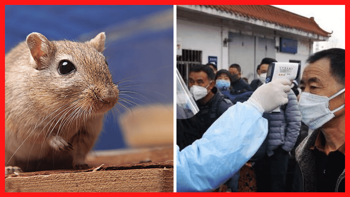 Man Dies on Bus in China From a New Virus That Transferred From Rodents, 32 Others Test Positive For It |