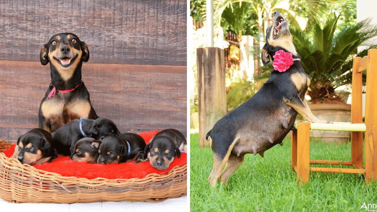 Mama Dog Glows Like a Star in The Best Maternity Photo Shoot Ever