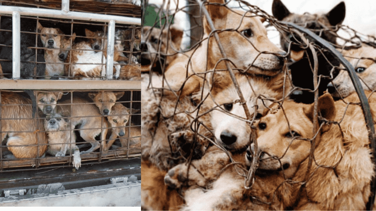 Mizoram Takes Its First Step Towards Ending Dog Meat Trade |