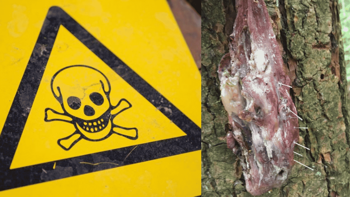 Horrible People are Putting Meat Stuffed With Poison and Needles in Off-Leash Dog Parks in Richmond to Harm Dogs |