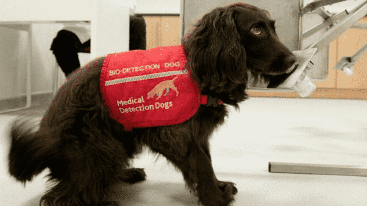 A British Charity and Scientific Entities Are Training Dogs to Detect Coronavirus in Humans |