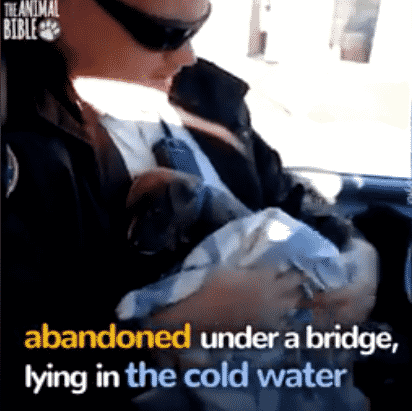A Freezing Puppy is Rescued After She Was Left to Die Under A Bridge |