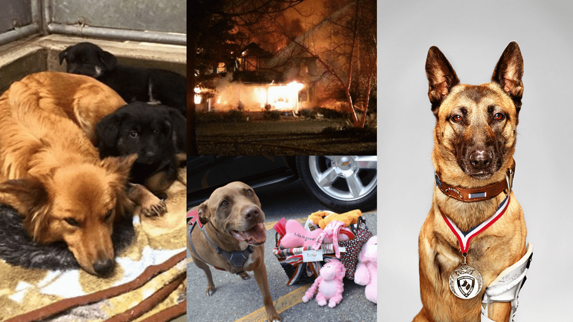 5 Heroic Dogs Prove that A Dog Is A Man's Best Friend!  