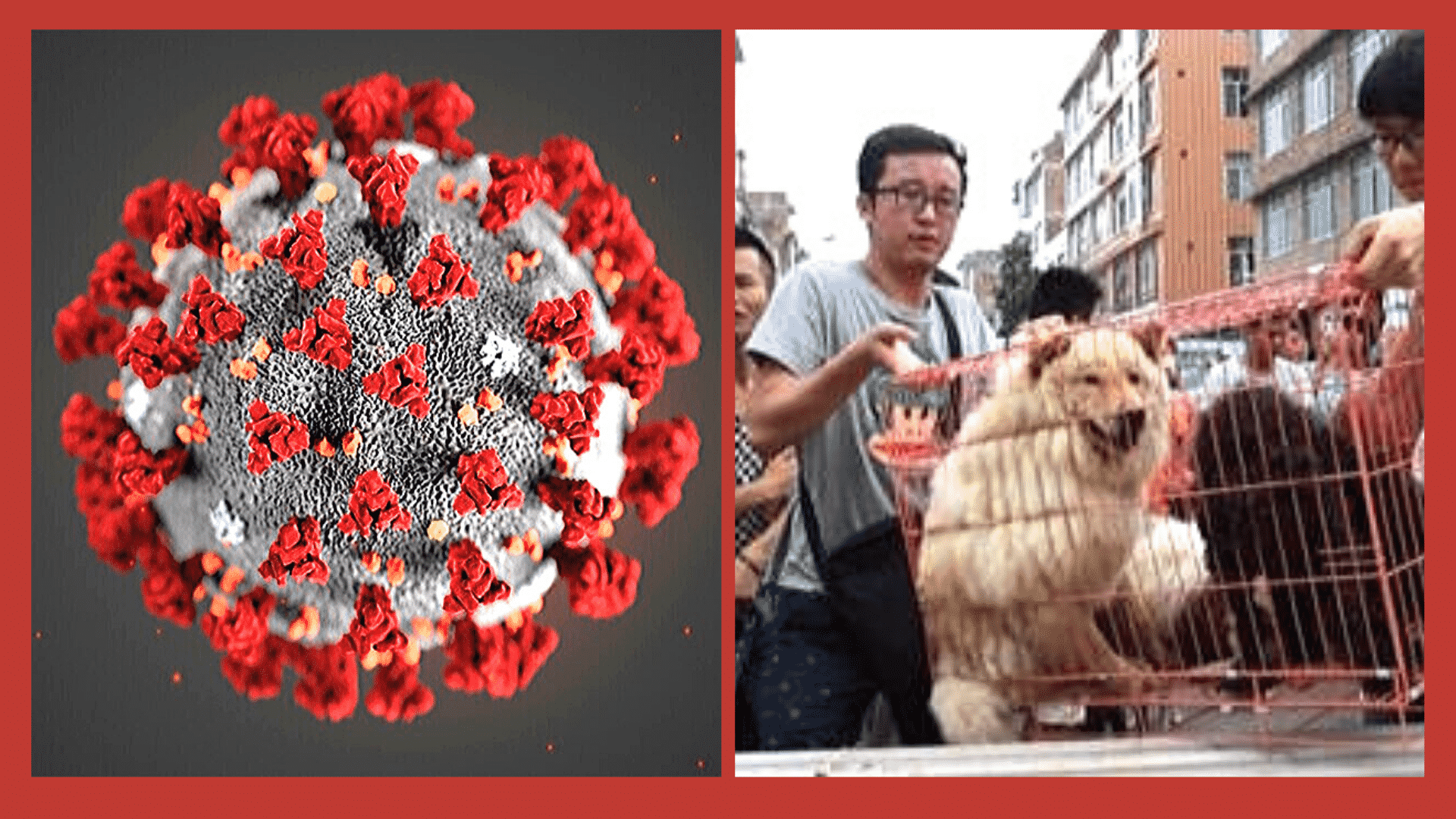 China Officials Kept the Spread of Coronavirus a Secret for Weeks Before Announcing the Crisis to the World!