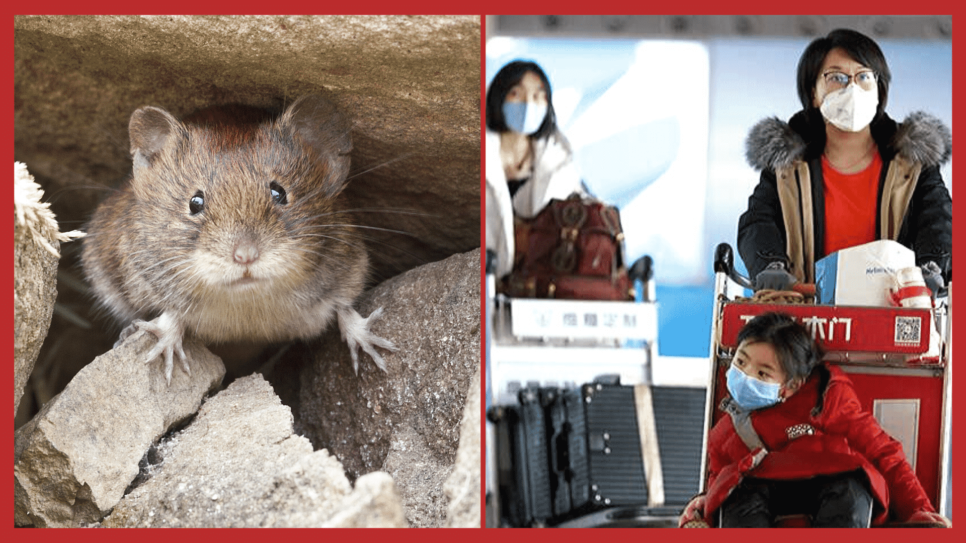 Hantavirus, the Deadly, Coronavirus Like Disease in China, Doesn't Have an FDA Approved Vaccine!