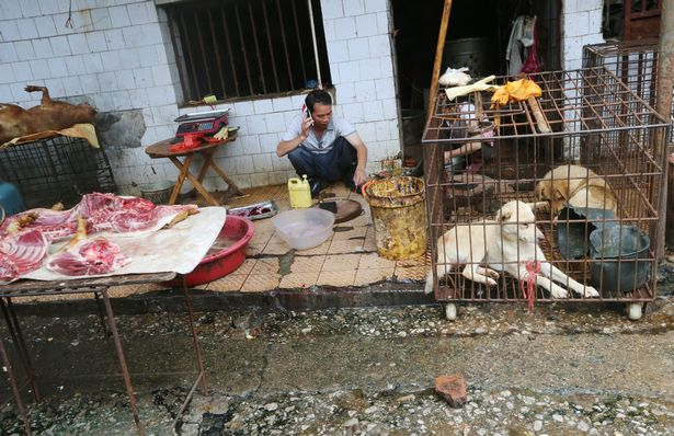 The Chinese Wet Markets Are Still There, And The Next Pandemic Will Be Much Deadlier |