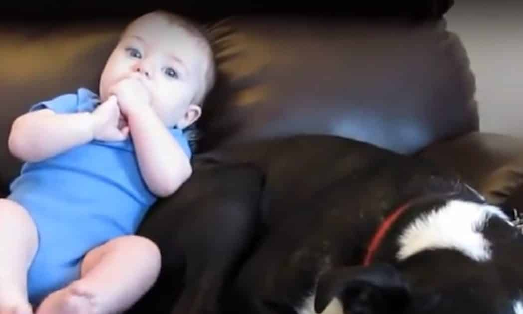 What Happens When A Baby Farts Near a Dog's Face? - The Dog's Reaction is Priceless!