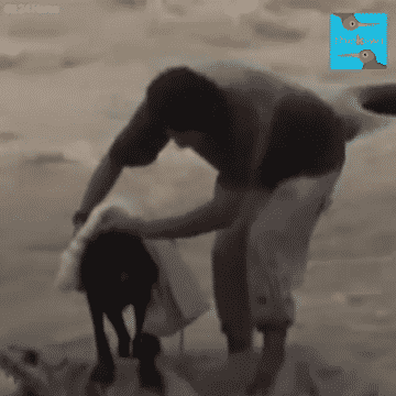 Blind and Pregnant Dog is Stuck in the Middle of A Strong Current Struggling to Survive! |