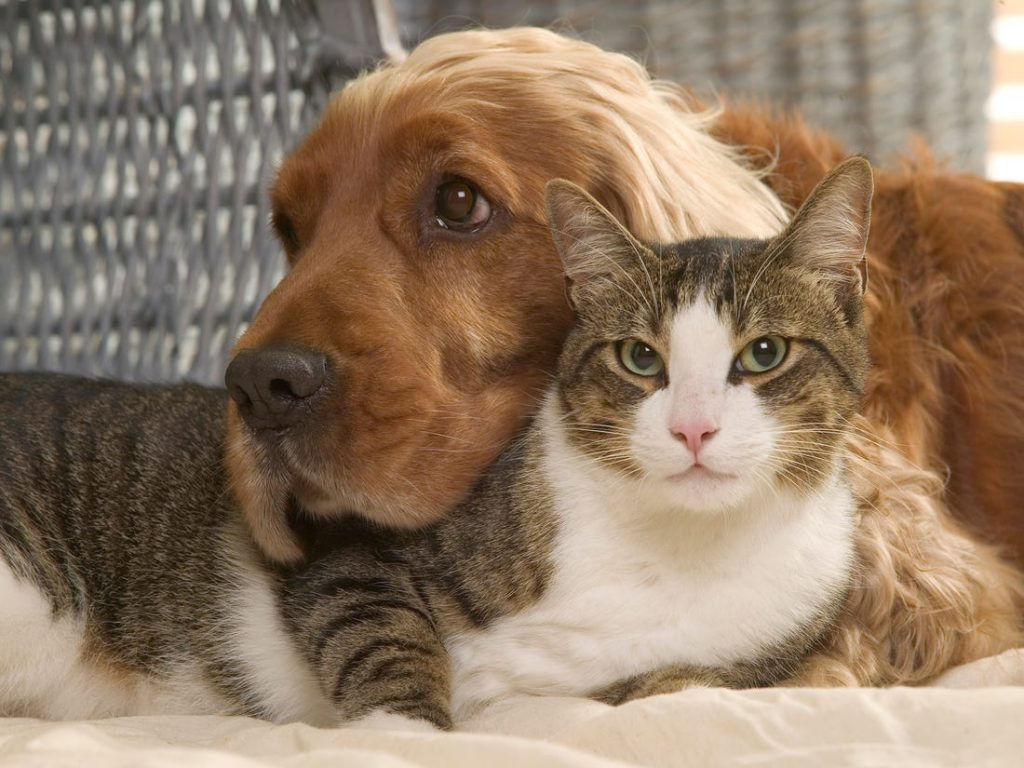 How to Care for Your Dog or Cat and Help them Survive During Quarantine? |