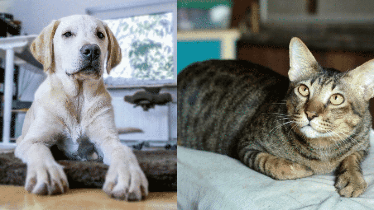 How to Care for Your Dog or Cat and Help them Survive During Quarantine?  