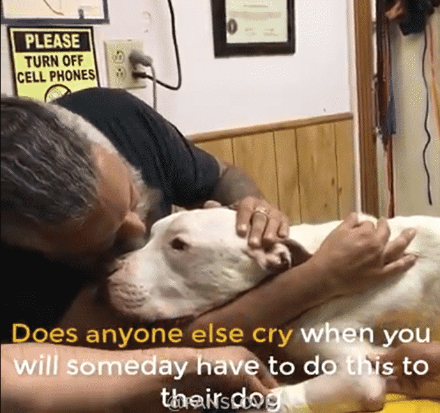 A Man Says Goodbye to His PitBull, He was Euthanized to End His Suffering