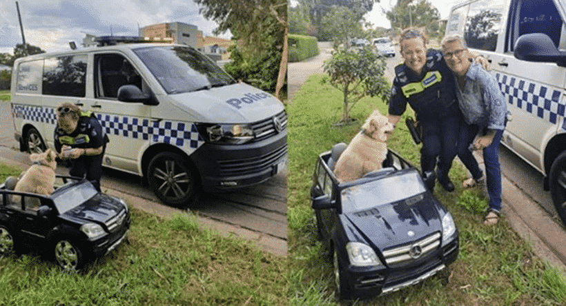 Australian Police Find Dog Driving Mini Mercedes Benz SUV on Road, Pulls Him Over |