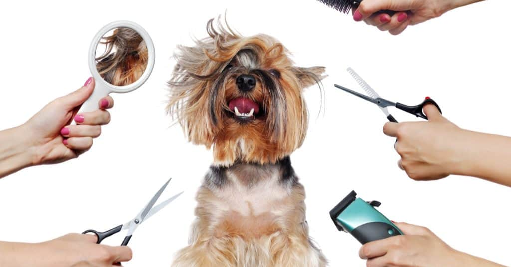 Grooming At Home? 5 Things You Absolutely Must Know Before You Start  