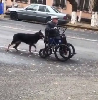 Magnificent Moment German Shepherd is Seen Pushing His Elderly Owner's Wheelchair Down Road |