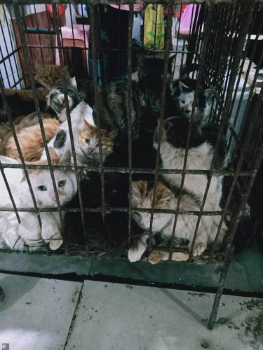 Leaked Photos Show Dogs, Cats, and Bats Still Being Sold in Chinese Wet Markets |