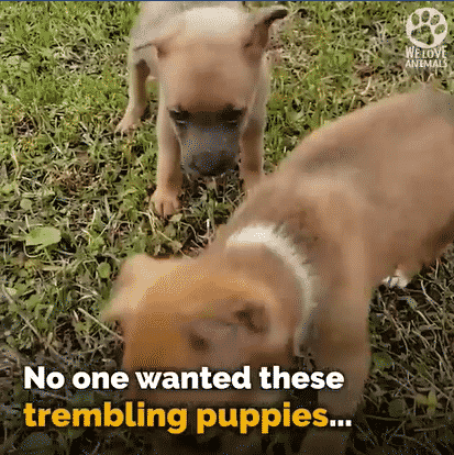 Two Trembling Puppies with A Medical Condition Were Left to Die in An Abandoned House |