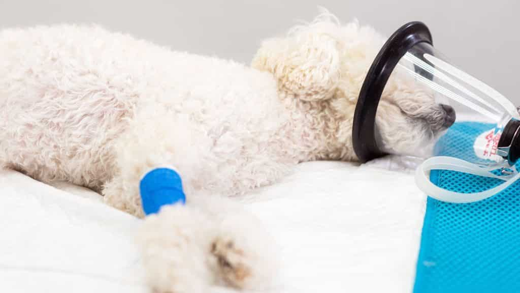 Pets Will Die As Vets Are Urged to Lend Medical Supplies Out During Coronavirus  