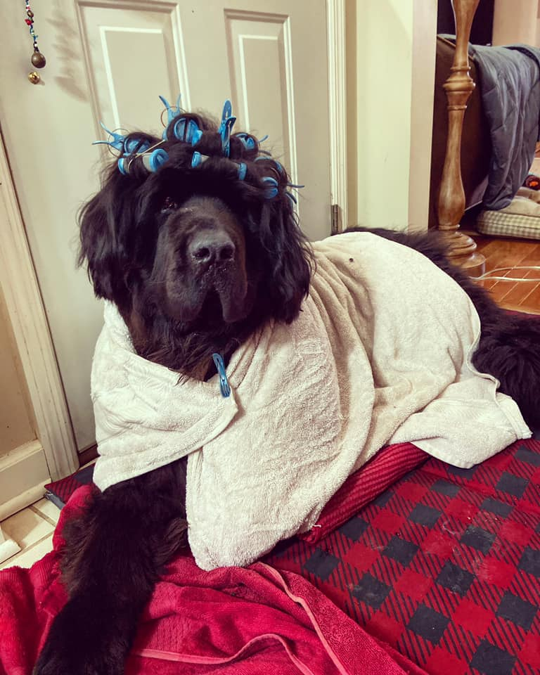 These Parents are spending their quarantine by giving their dog a different hairstyle and costume every day​! |
