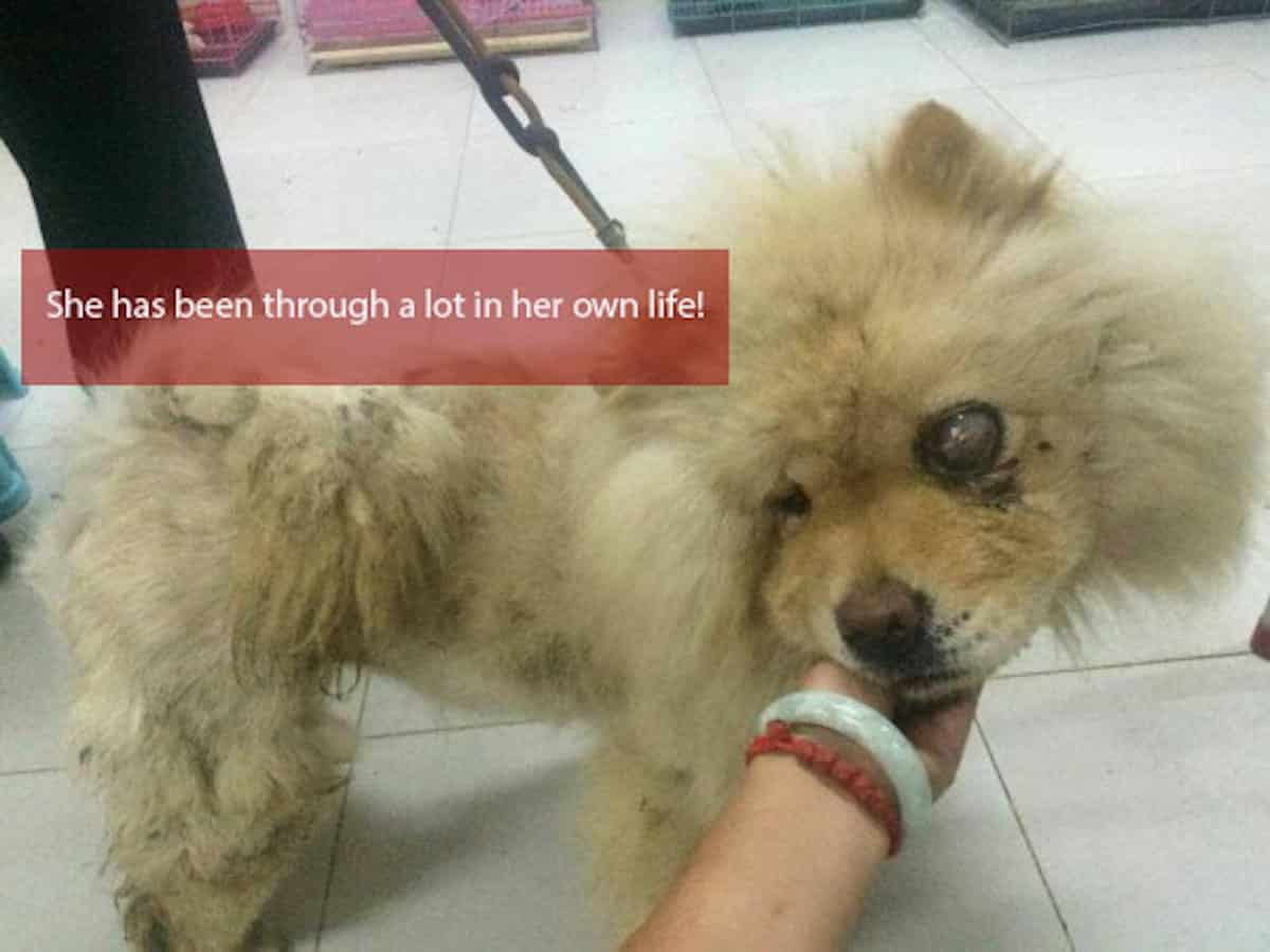 She Lost An Eye and Partially Skinned At A Meat Trade In China. Now, Look At Her! |