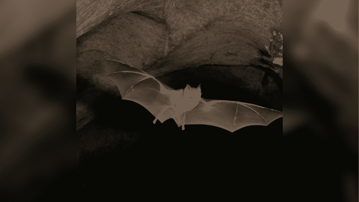 Next Potential Hosts For Coronavirus Other Than Bats: Scientists Are Warning About the Imminent Danger! |