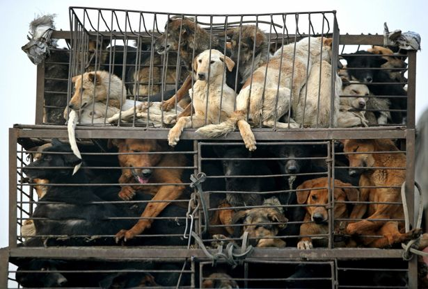 Help Us Shut Down Wet Markets, Where Dogs Are Skinned Alive and Pandemics Are Born! |