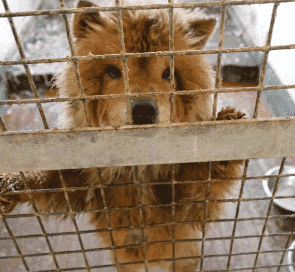 """""""Pet Fishing"""" Scams: Animal Lovers Are Tricked to Receive Sick and Starving Animals From the Internet 