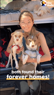 Man Rescues Abandoned Dogs Stuck in the Canyon |