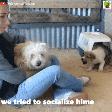A Puppy Transformed From A Fearful One into A Calm and Loving Dog |