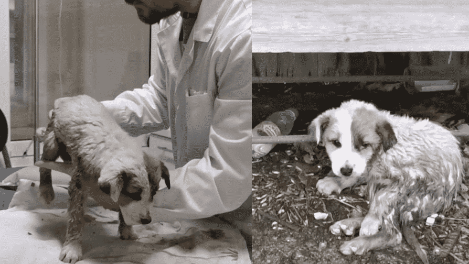 Everyone Saw This Puppy's Health Deteriorate Every Day, But No one Helped! Luckily, Her Savior Showed Up!
