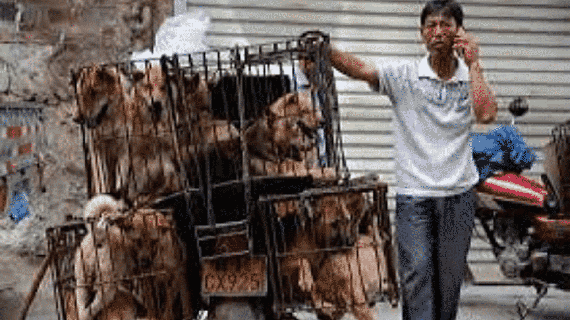 Help Us Shut Down Wet Markets, Where Dogs Are Skinned Alive and Pandemics Are Born!