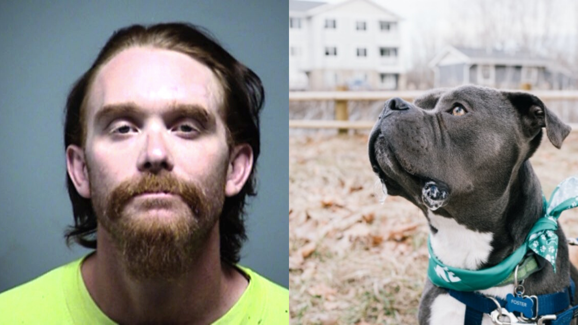 This Monster Just Came Out of Jail and Decided to Get & Abuse Dogs to Celebrate His Release! |