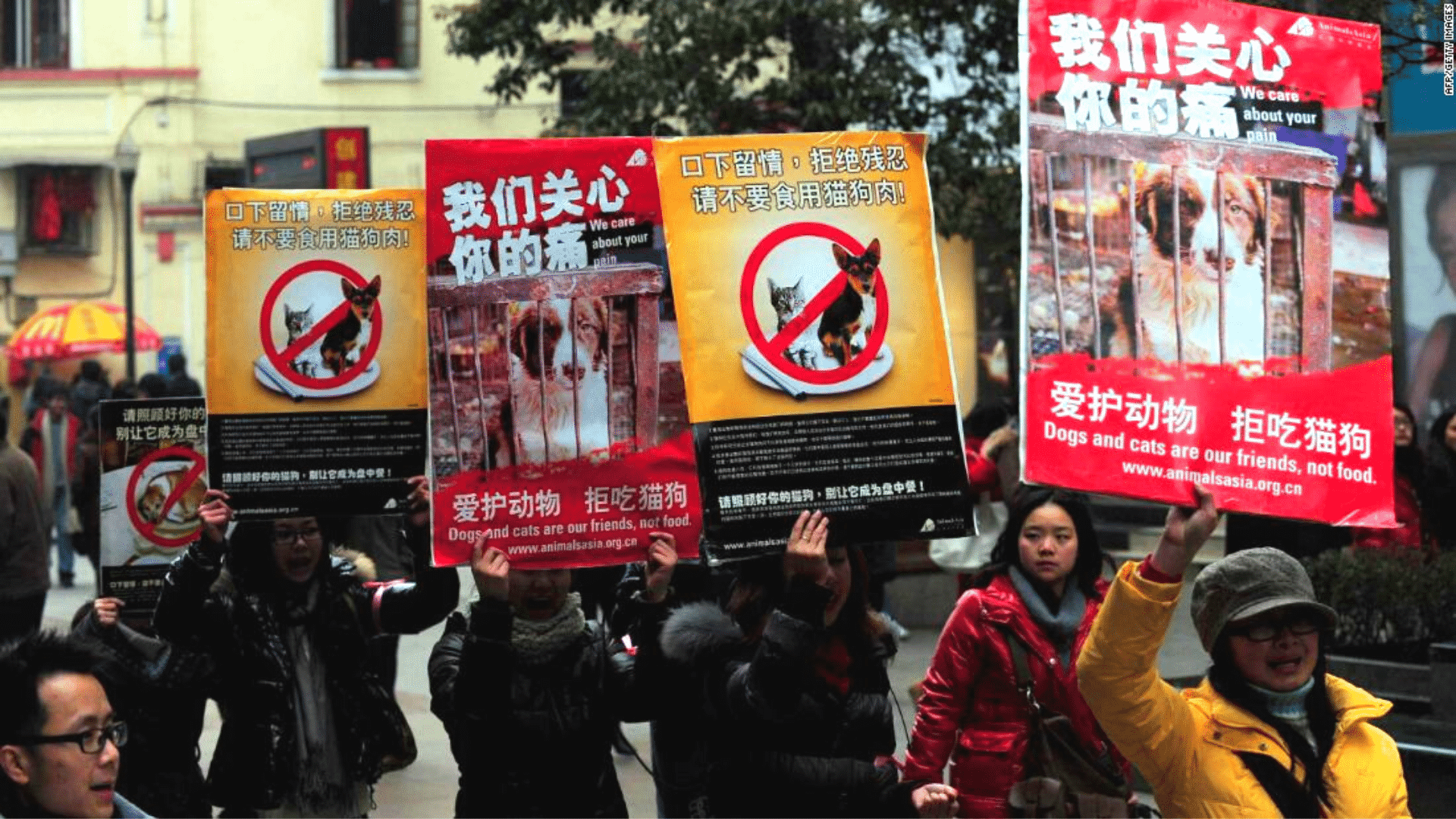 Victory: One City in China has Officially Banned the Consumption of Dogs, Cats, and Bats!