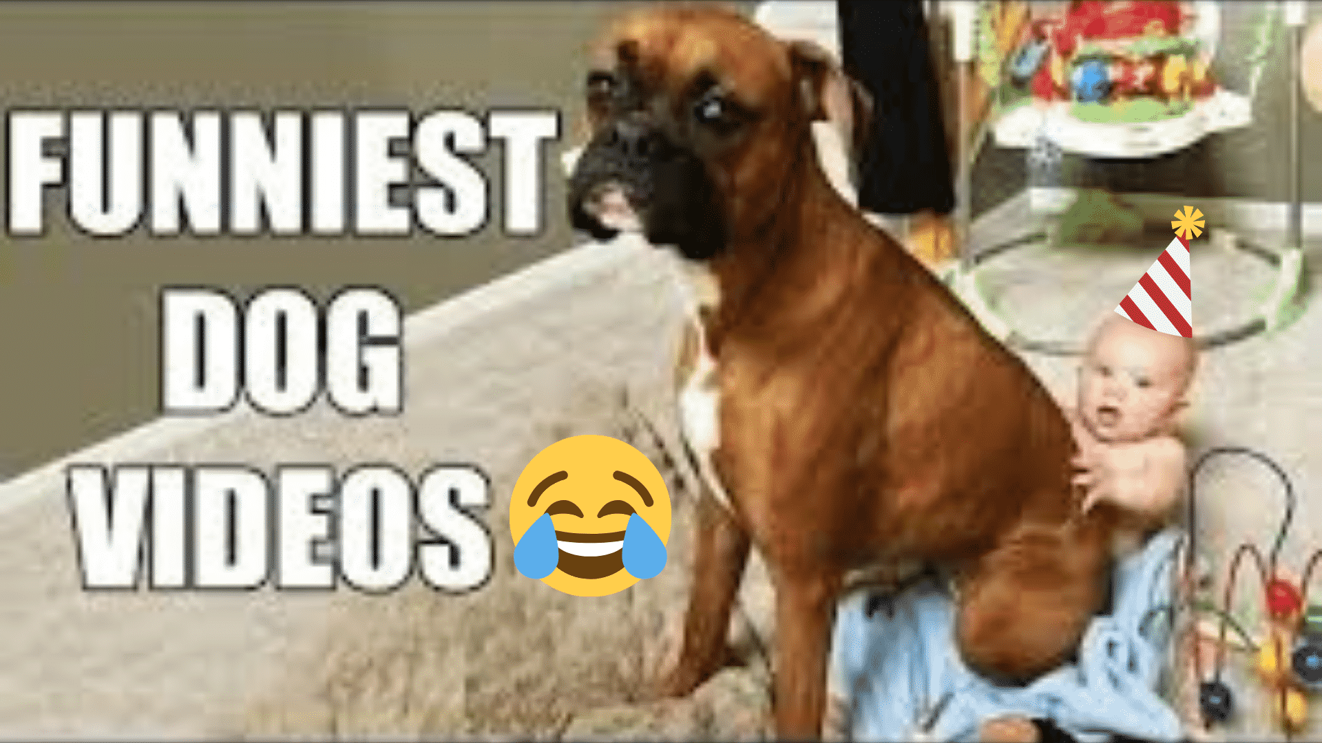 Try Not to Laugh Challange #1: Hilarious Dog Videos Compilation |
