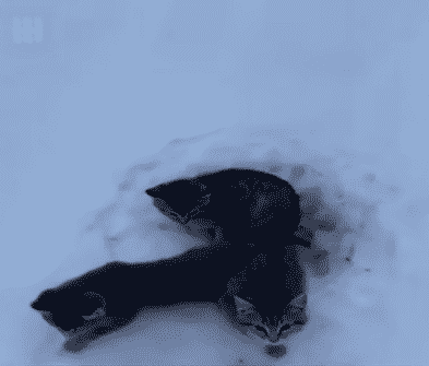 Two Men Rescue Cats Stuck and All Alone in the Snow |