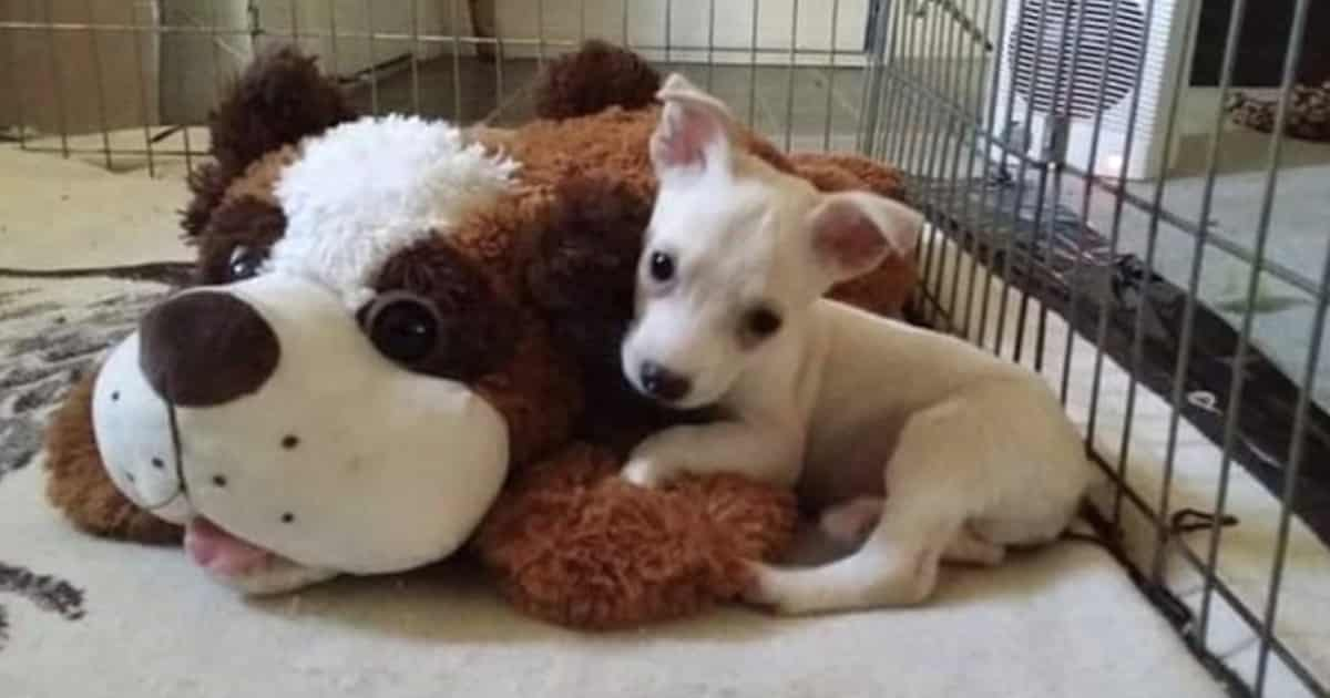 """Owner Threatens He Will """"Drown This Puppy"""" If No One Takes Him Soon 