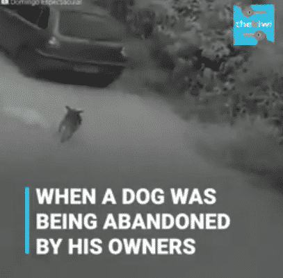 The Heartbreaking Moment A Dog Was Abandoned By His Owners on A Highway in Brazil |