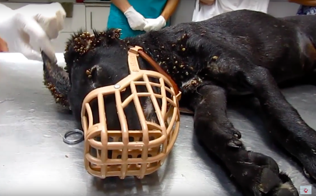 Thousands of Ticks Were Sucking Her Blood Dry When They Found Her, But She Showed Her True Strength |