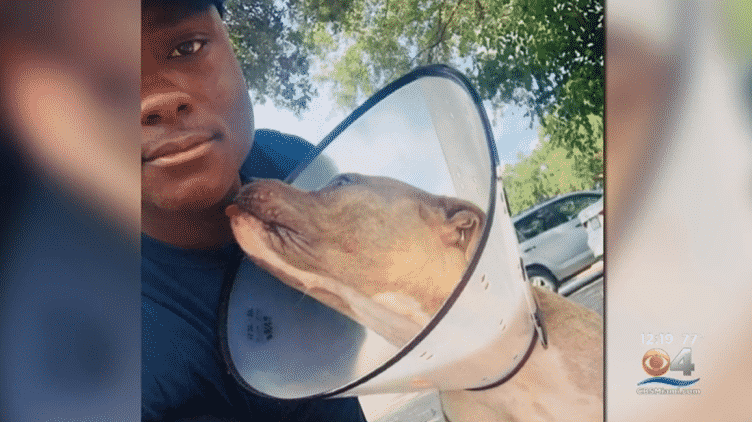 Firefighter Finds Pit Bull Not Moving, Goes Against Regulations To Save Her Life |