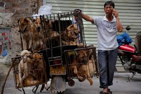 China is Changing Its Laws So No One Eats Dogs Anywhere in The Country Ever Again |