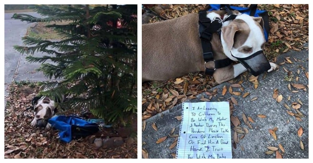 Man Ties His Pitbull To a Tree At Midnight, Leaves a Note, and Then Abandons Town |